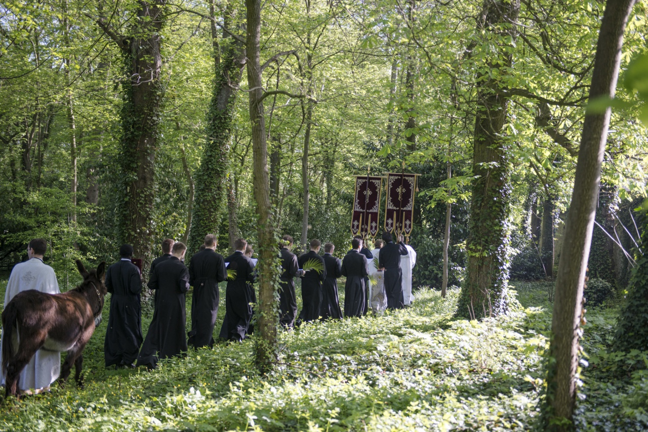 Фотографии крестного хода и литургии Вербного воскресенья